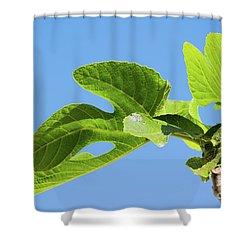 Bright Green Fig Leaf Against The Sky Shower Curtain by Cesar Padilla