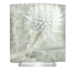 Bright Master Shower Curtain by Tim Good