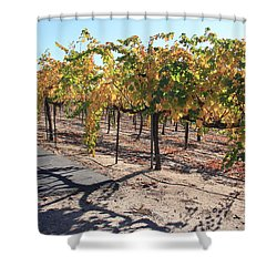 Shower Curtain featuring the photograph Bright November Morning by Suzanne Oesterling