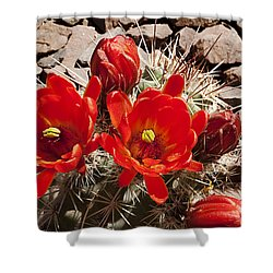 Shower Curtain featuring the photograph Bright Orange Cactus Blossoms by Phyllis Denton