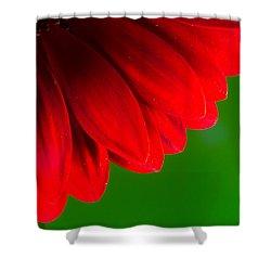 Bright Red Chrysanthemum Flower Petals And Stamen Shower Curtain