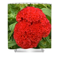 Bright Red Cockscomb Shower Curtain