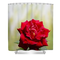 Bright Red Rose Shower Curtain by Perry Van Munster
