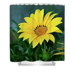 Shower Curtain featuring the photograph Bright Yellow Gazania By Kaye Menner by Kaye Menner