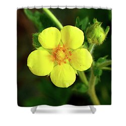 Bright Yellow Morning Shower Curtain