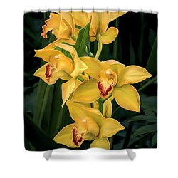 Bright Yellow Orchids Shower Curtain