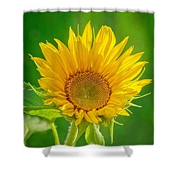 Bright Yellow Sunflower Shower Curtain by Alana Ranney