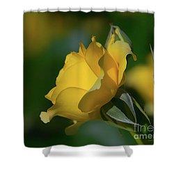 Bright Yellow Walking On Sunshine Rose Shower Curtain
