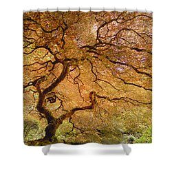 Brilliant Japanese Maple Shower Curtain