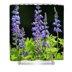 Brilliant Lupines Shower Curtain by Elvira Butler