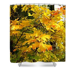 Shower Curtain featuring the photograph Brilliant Maple Leaves by Will Borden