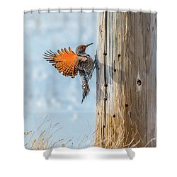 Brilliant Northern Flicker Woodpecker Shower Curtain by Yeates Photography
