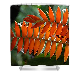 Brilliant Orange Nature Shower Curtain