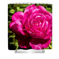 Brilliant Rose Shower Curtain