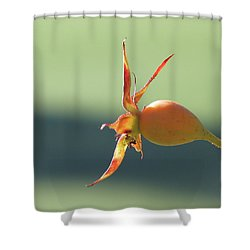 Brilliant Seed Pod Shower Curtain