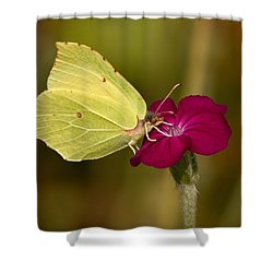 Shower Curtain featuring the photograph Brimstone 1 by Jouko Lehto