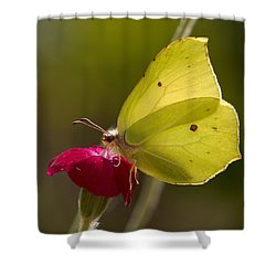 Shower Curtain featuring the photograph Brimstone 2 by Jouko Lehto