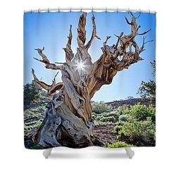 Bristlecone And Sun Shower Curtain