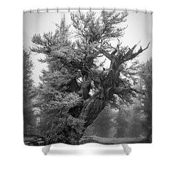 Bristlecone Beauty Shower Curtain
