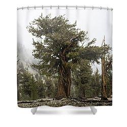 Bristlecone Elder Shower Curtain