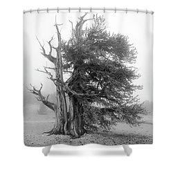 Bristlecone Mist Shower Curtain