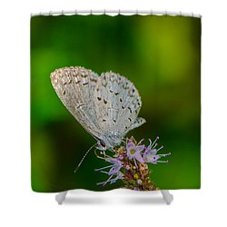 British Butterfly Or Little Blue Shower Curtain by Bruce Pritchett