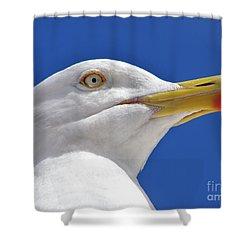 British Herring Gull Shower Curtain by Terri Waters
