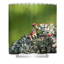 Brits On The Fence Shower Curtain
