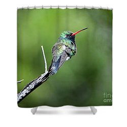 Broad-billed Hummingbird Shower Curtain