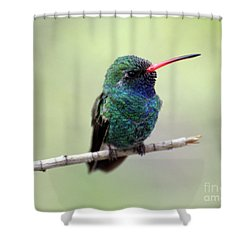 Broad-billed Hummingbird Portrait Shower Curtain