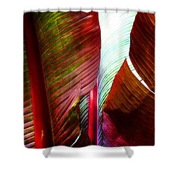 Shower Curtain featuring the photograph Broad Leaves by Timothy Bulone