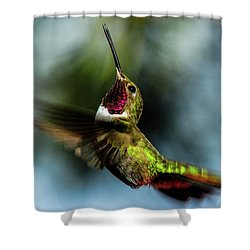 Broad-tailed Hummingbird In Flight Shower Curtain