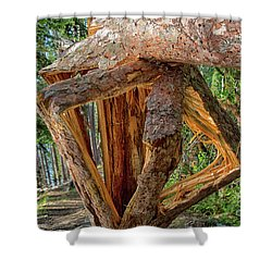 Broken In The Forest Shower Curtain