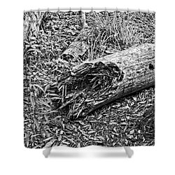 Shower Curtain featuring the photograph Broken Tree by Maggy Marsh