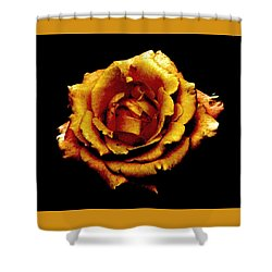 Bronzed Rose Shower Curtain by Angela Davies
