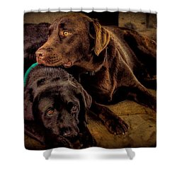 Brotherhood Shower Curtain by Wallaroo Images