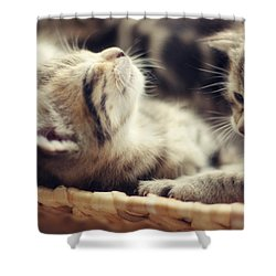 Shower Curtain featuring the photograph Brotherly Love by Amy Tyler