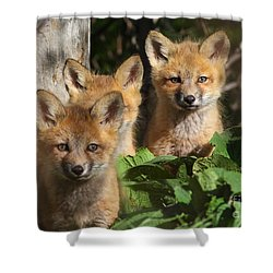 Brothers Shower Curtain by Mircea Costina Photography