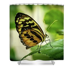 Brown And Black Tropical Butterfly Resting Shower Curtain