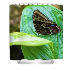 Brown And Blue Butterfly Shower Curtain