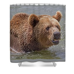 Brown Bear 10 Shower Curtain