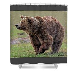 Brown Bear 14.5 Shower Curtain