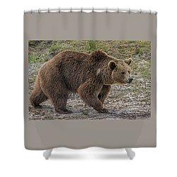 Brown Bear 6 Shower Curtain