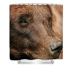 Brown Bear Shower Curtain