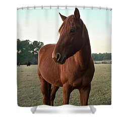 Shower Curtain featuring the photograph Brown Beauty by Betty Northcutt