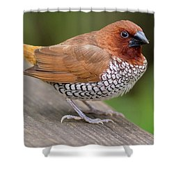 Shower Curtain featuring the photograph Brown Bird by Raphael Lopez