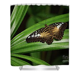 Brown Clipper Butterfly -parthenos Sylvia- On Frond Shower Curtain