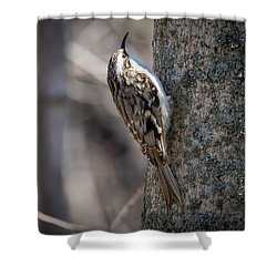 Shower Curtain featuring the photograph Brown Creeper  by Ricky L Jones
