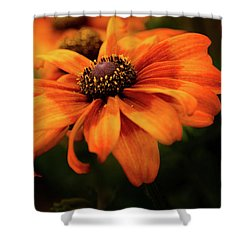 Shower Curtain featuring the photograph Brown Eyed Susan by Mary Jo Allen