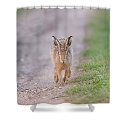 Brown Hare Approaching Down Track Shower Curtain